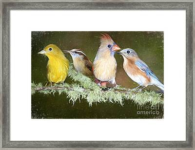 Songbird Quartet Framed Print by Bonnie Barry