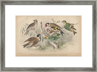 Songbirds Framed Print by Dreyer Wildlife Print Collections