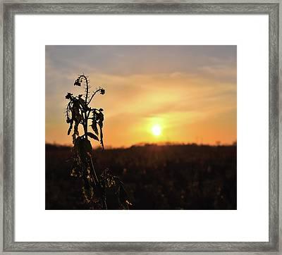 Sonnenuntergang Framed Print
