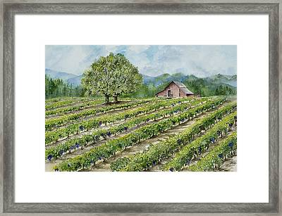 Sonoma County Vineyard Framed Print by Virginia McLaren