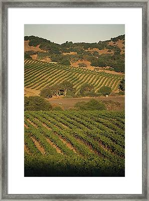 Sonoma County Vineyards, California Framed Print by Michael S. Lewis