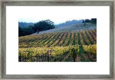 Sonoma County Vineyards Near Healdsburg Framed Print