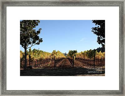 Sonoma Vineyards - Sonoma California - 5d19314 Framed Print by Wingsdomain Art and Photography