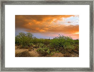 Framed Print featuring the photograph Sonoran Desert H11 by Mark Myhaver