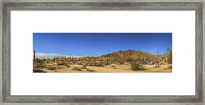 Sonoran Desert Pano Framed Print by Robert Bales