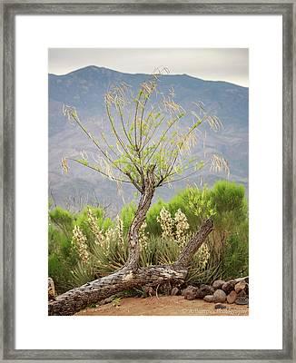 Sonoran Flora Framed Print