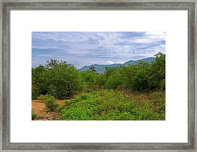 Framed Print featuring the photograph Sonoran Greenery H30 by Mark Myhaver