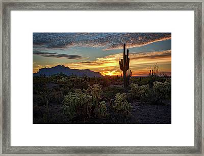 Sonoran Morning Calling  Framed Print