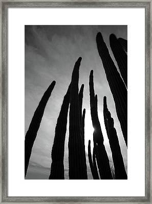 Sonoran Spires Framed Print by Robin Street-Morris