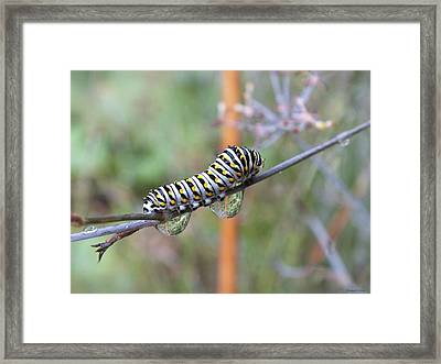 Soon I Will Have Wings Framed Print
