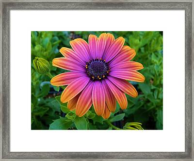 Sooo Beautiful Framed Print