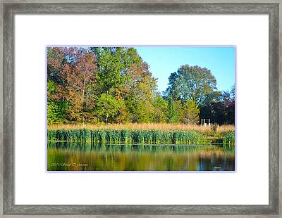 Soothing Reflections Framed Print by Sonali Gangane