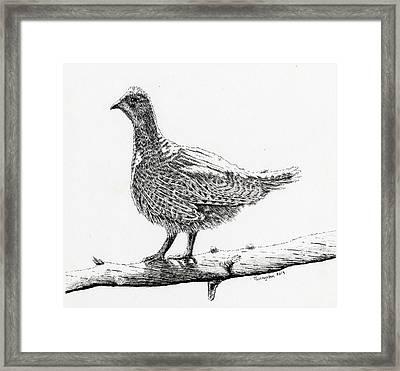Sooty Grouse Framed Print