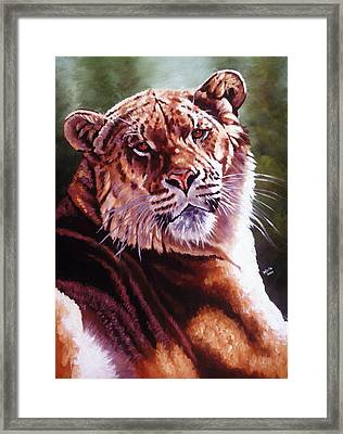 Sophie The Liger Framed Print by Barbara Keith