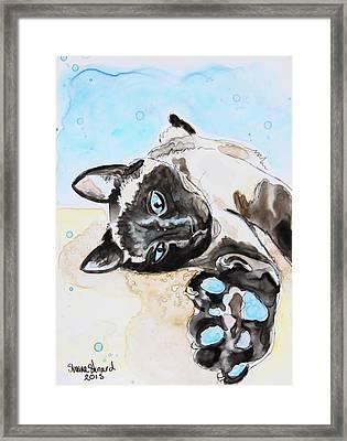 Sophie The Siamese Framed Print by Shaina Stinard