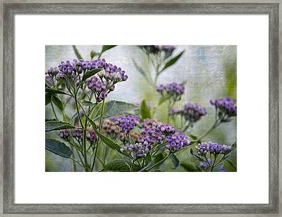 Sophies Garden Framed Print