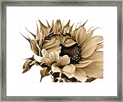 Sophisticated Framed Print