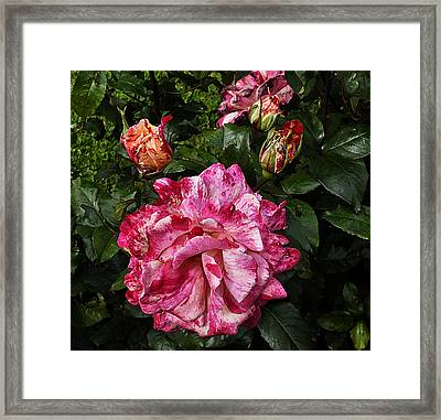 Framed Print featuring the photograph Sorbet by Karo Evans