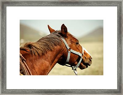 Sorrel Crest Framed Print by Todd Klassy
