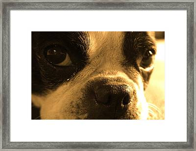 Sorry Framed Print by Angie Wingerd