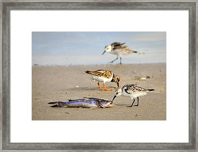 Sorry Buddy Framed Print by Debra Martz