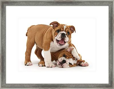Sorry, Didn't See You There Framed Print