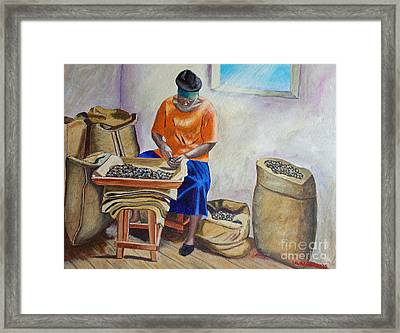 Sorting Nutmegs Framed Print