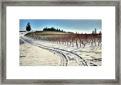 Soter Vineyard Winter Framed Print by Jerry Sodorff