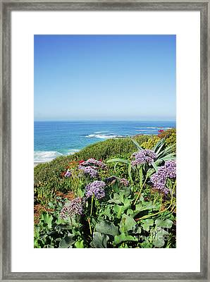 Sothern California Morning Framed Print by Timothy OLeary