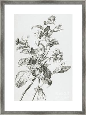 Souci Des Jardins Framed Print by Gerard van Spaendonck