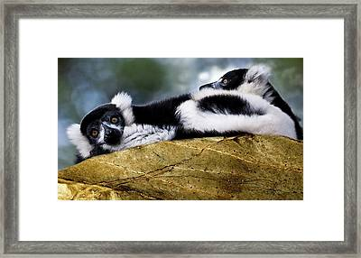 Soul Mates Framed Print by Heather Thorning