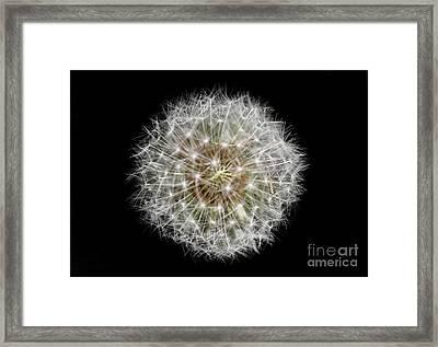 Soul Of A Dandelion Framed Print