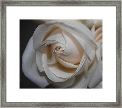Soul Of A Rose Framed Print by Nancy TeWinkel Lauren