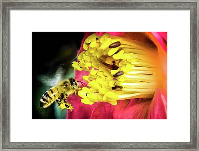 Framed Print featuring the photograph Soul Of Life by Karen Wiles