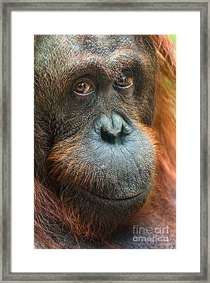 Soulful Framed Print by Jamie Pham