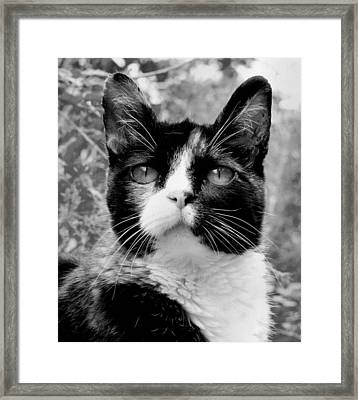 Souls Great And Small Framed Print by Rory Sagner