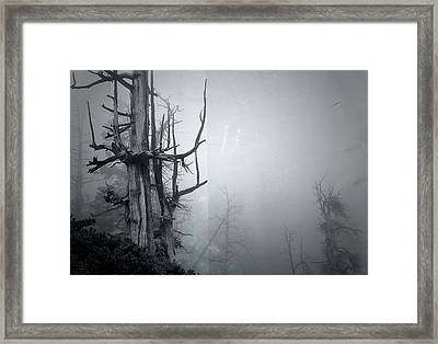 Souls Framed Print