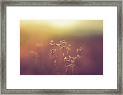 Framed Print featuring the photograph Souls Of Glass by Shane Holsclaw