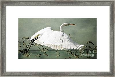 Souls Take Flight ... Framed Print by Chris Armytage