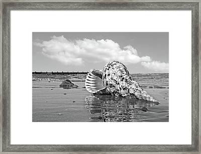 Sounds Of The Ocean - Trumpet Triton In Black And White Framed Print by Gill Billington