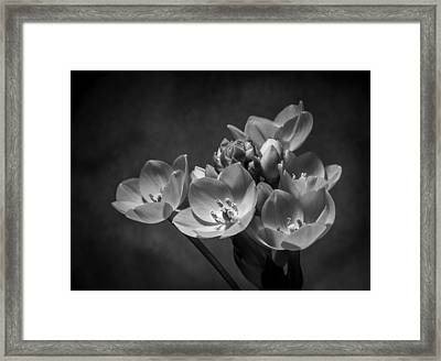 South African Orange Star #1 Framed Print by Len Romanick