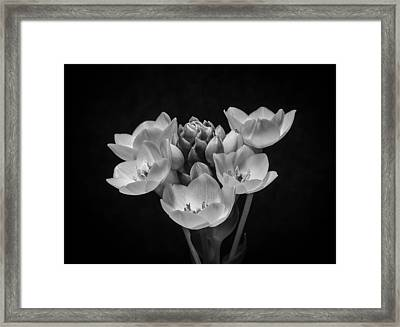 South African Orange Star #2 Framed Print