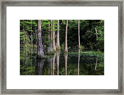 South Alabama Serenity Framed Print by JC Findley