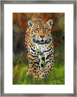 South American Jaguar Framed Print