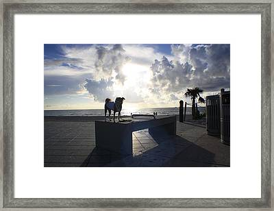 South Beach Dog Walk Framed Print