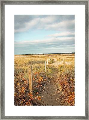 South Cape Beach Trail Framed Print by Brooke T Ryan