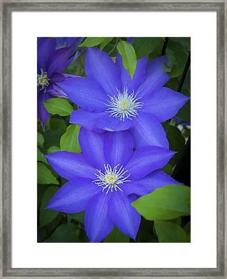 South Carolina Color Framed Print