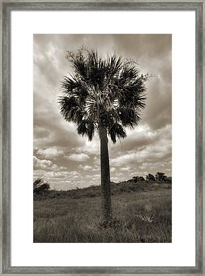 South Carolina Palmetto Palm Tree Framed Print by Dustin K Ryan