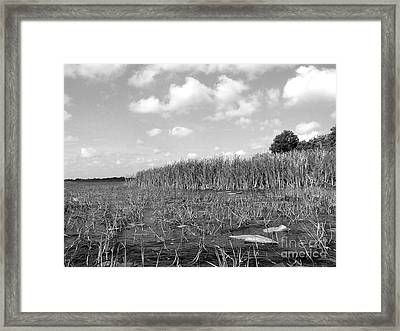 South Island Framed Print by Jack Norton