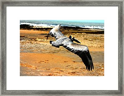 South Padre Pelican Framed Print by Laurie Prentice